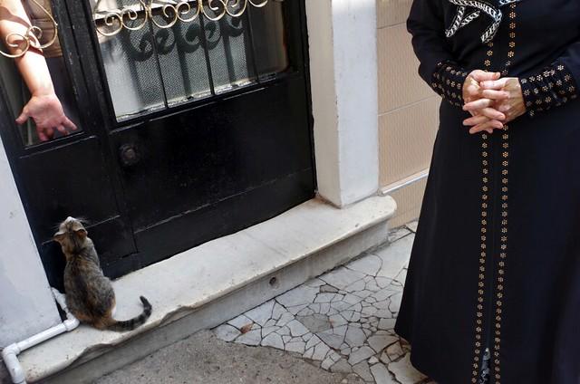 40 Fierce Photos Featuring Felines - Cat Street Photography - IMGP3105-stavrosstam