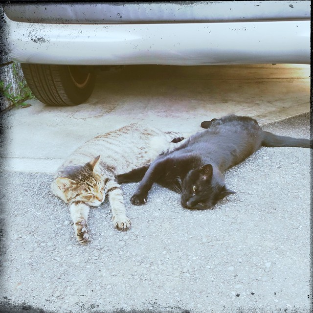 Two cats lying down on street
