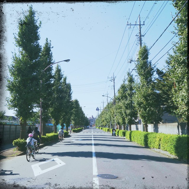 People cycling on the street