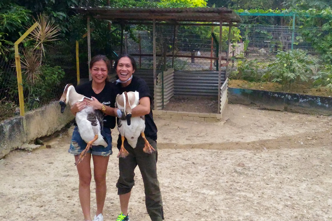 goose catching at pd ostrich farm