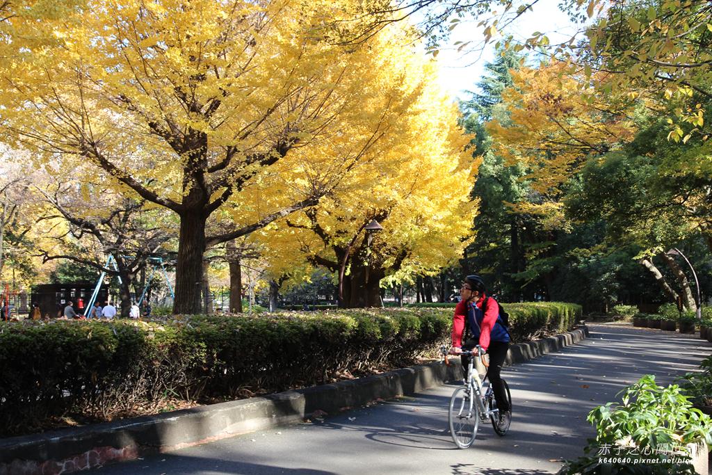 東京賞楓-日比谷公園43