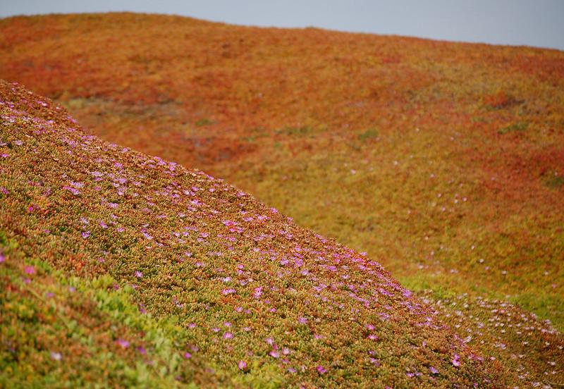 seashore_flowers