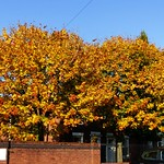 Autumn shades in Deepdale