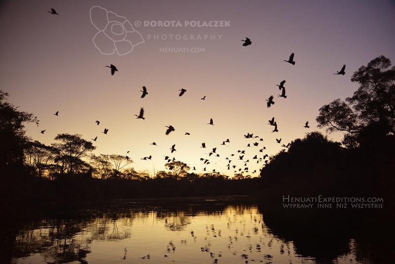 6 pm on Pantanal