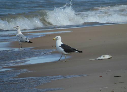 Chandeleur_beach_1