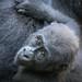 Cincinnati Zoo 8-20-15-7815 by joemastrullo