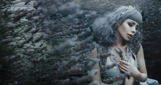 .bella. - Lavender's song...