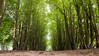 Into the woods by Sandra de Geus