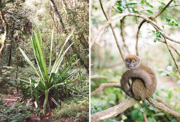 RYALE_Madagascar_Blog1_003