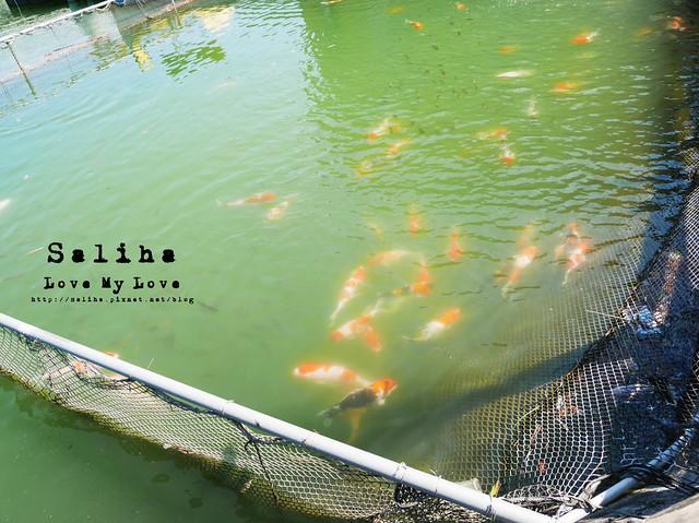 宜蘭員山景觀餐廳活魚山產料理推薦 (28)