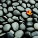 lone leaf by Boyce 1