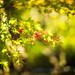 Little Autumn by moaan