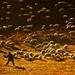 Shepherd and the Sheep, Inner Mongolia, China by TOONMAN_blchin