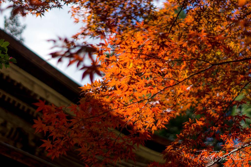 極楽寺 (Gokuraku-ji Temple)