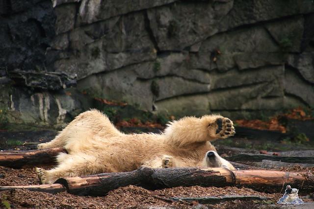 Tierpark Berlin 07.11.2015  060