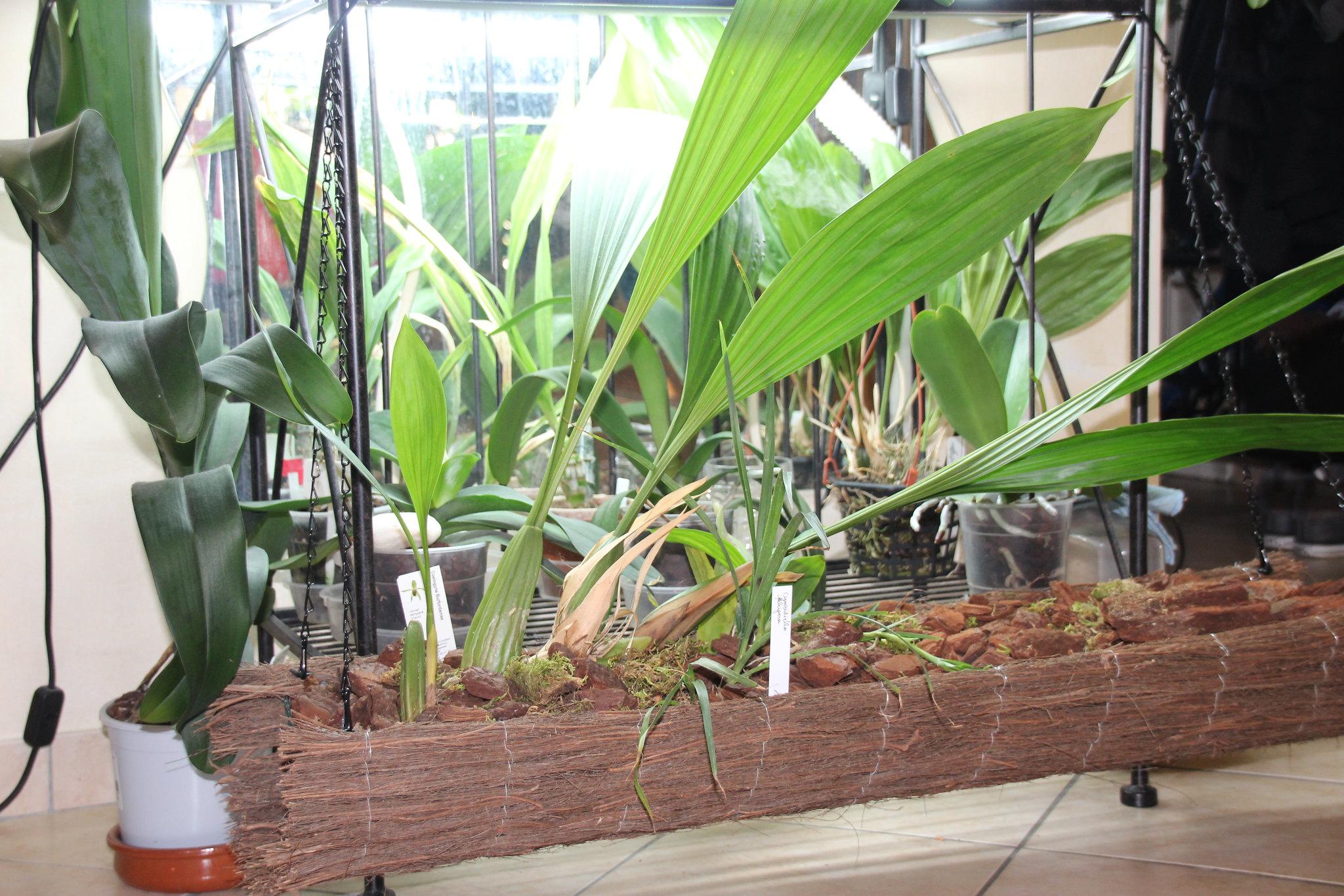 Bac orchid es d 39 un m tre de long - Tronc d arbre artificiel ...