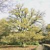 Magestic Treelive :heart:️#treelove #dehogeveluwe #nationalpark #tree @hogeveluwe