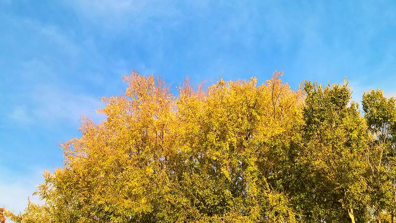 FallTrees_1