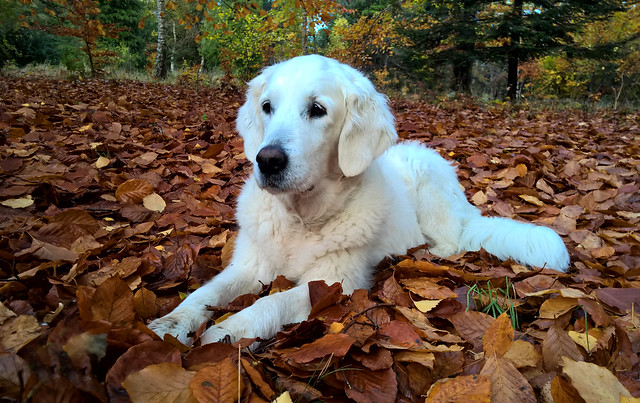 Ditte in the autumn leaves