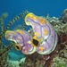 Sea Squirts (Chas Anderson)