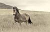 Tiptoe in the Grasses _5504