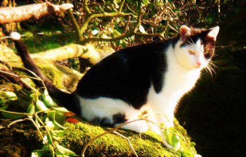 [Updated] Wed, Aug 31st, 2016 Lost Male Cat - Mount Temple, Moate, Westmeath