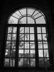 Salmon Bay K-8 Gymnasium Window
