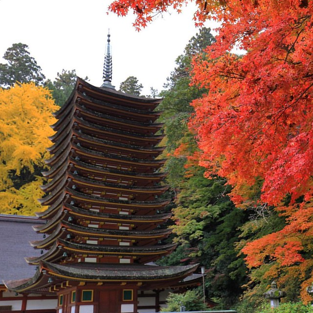 Photo:#紅葉 🍁 #ドライブ 🚗の帰り道、少し折れて #談山神社 に、ちょい寄り。紅葉ピーク。今日は写真撮る予定無しで来たのでコンデジで。もうかなり暗かったけど、昼間みたいに😓 By double-h_by_phone