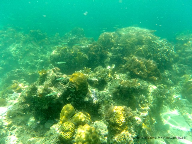 Different Corals in Black Island