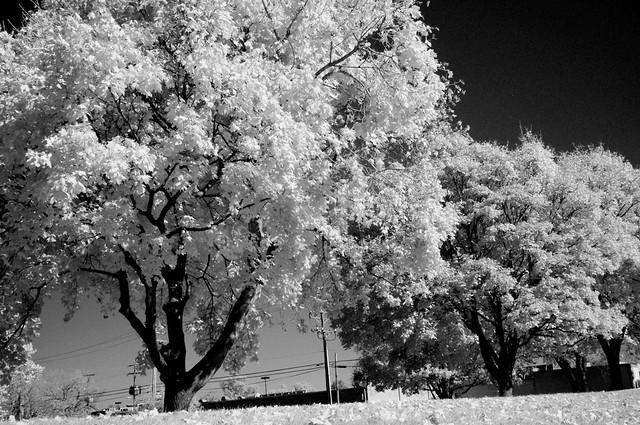 IR tree line