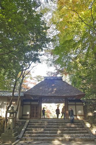 【写真】2014 紅葉 : 法然院/2018-10-19/IMGP7484