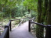Springbrook National Park by David & Cheryl M