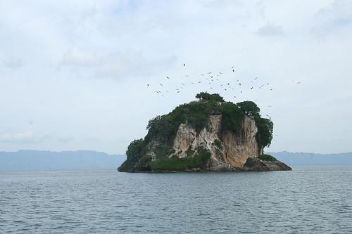 21 - Los Haitises national park - bird breeding island / Los Haitises Nationalpark - Brutinsel