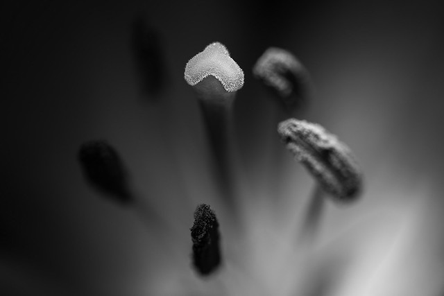 a light among the stamens