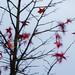 Spät-im-Herbst-15 --0940 by clickraa