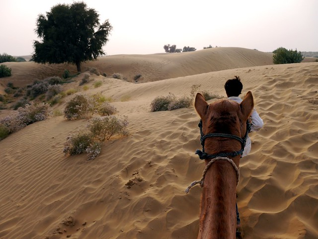 Camel Safari in the Thar Desert
