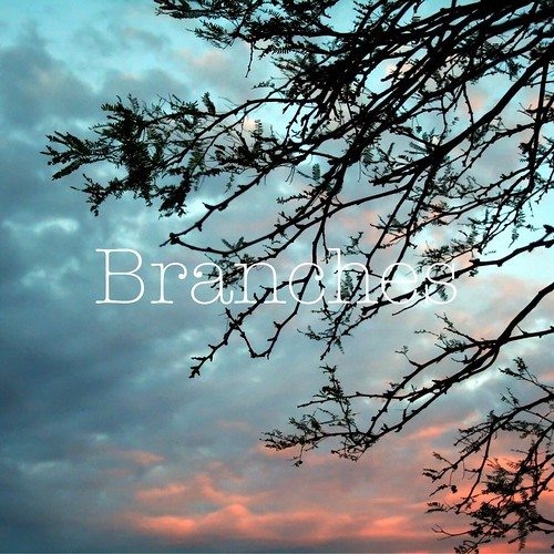 December Reflections :: Branches