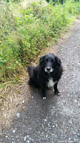 Sat, Dec 12th, 2015 Lost Male Dog - Tullamore, Killeigh, Offaly