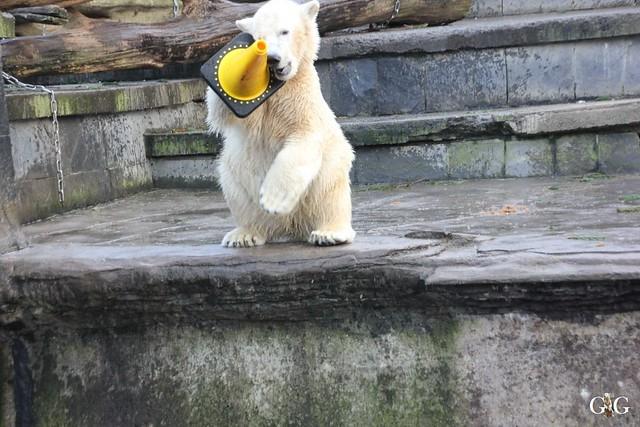 Besuch Zoo Rostock 30.12.201521