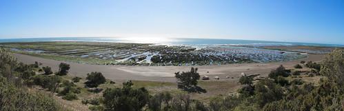 La Peninsula de Valdés: Punta Norte. Pas d'orque en vue mais bien des éléphants de mer...