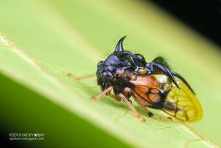 Treehopper  (Poppea sp.) - DSC_2625