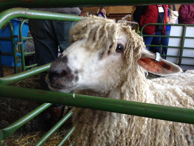 VT Sheep and Wool Festival