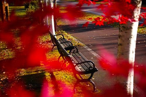 ベンチと紅葉