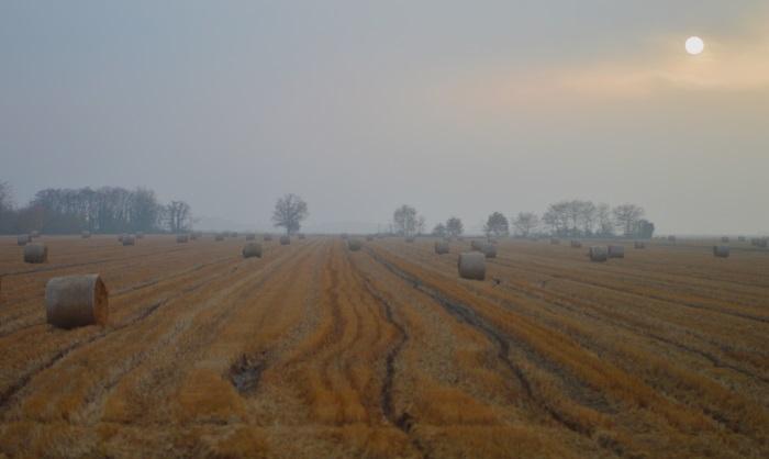 fog (3)