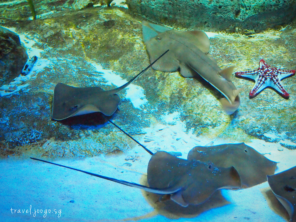 travel.joogo.sg - SEA Aquarium 16