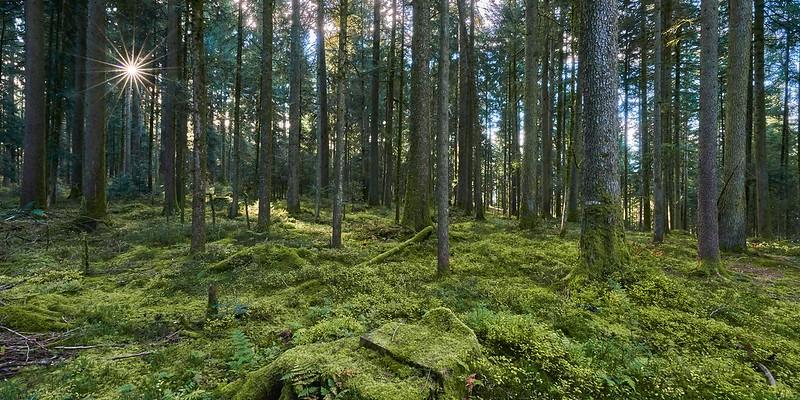 Forest - Eggiwil