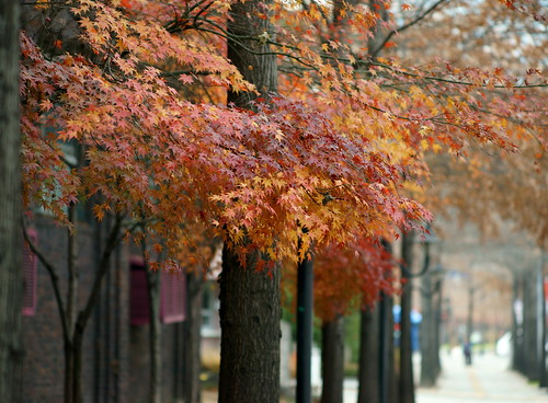 Autumn is still here in Daegu, Korea.