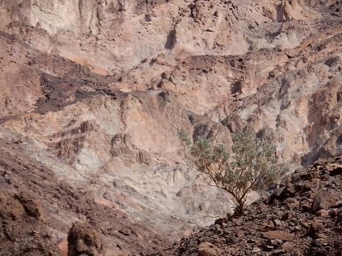 Death Valley NP - Natural Bridge - 1