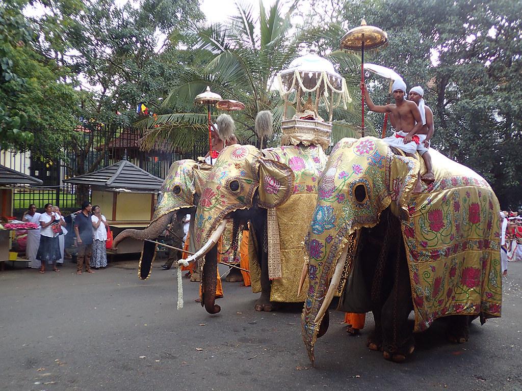 Elephant festival  Kandy