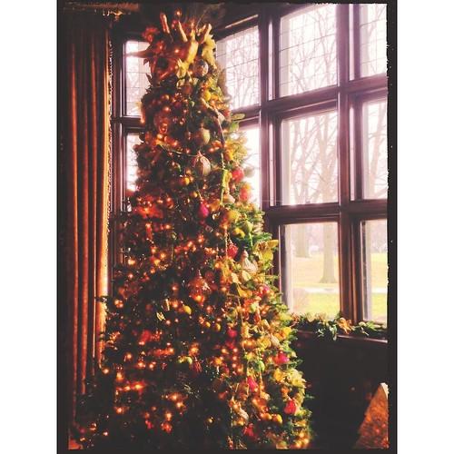 December 22 - Tree